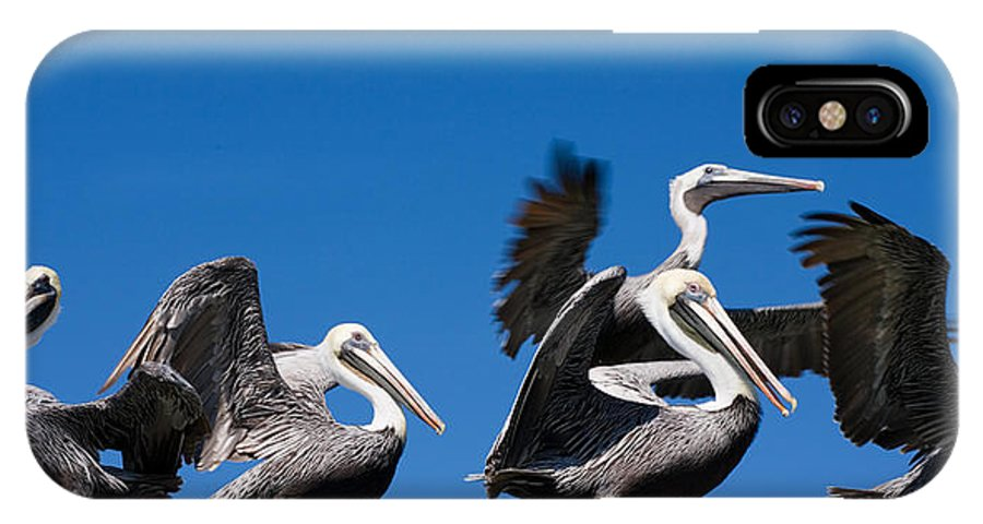 Pelicans IPhone X Case featuring the photograph Pelicans Take Flight by Mal Bray