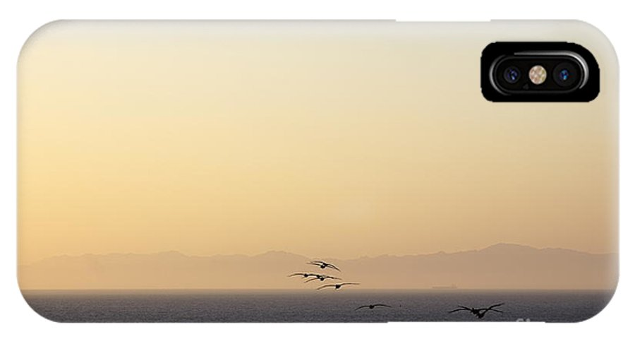 Southern IPhone X Case featuring the photograph Pelicans by Viktor Savchenko