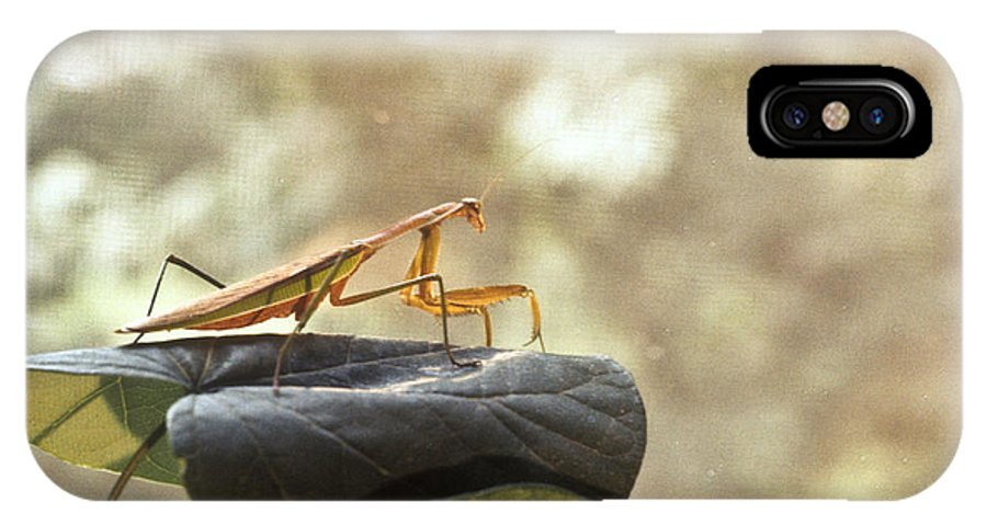 Praying IPhone Case featuring the photograph Pensive Mantis by Douglas Barnett
