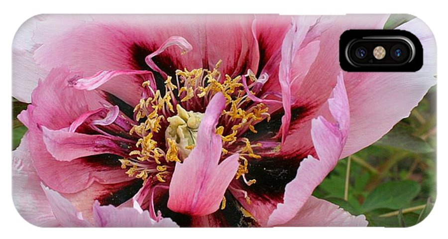 Peony IPhone X Case featuring the photograph Peony by Christiane Schulze Art And Photography