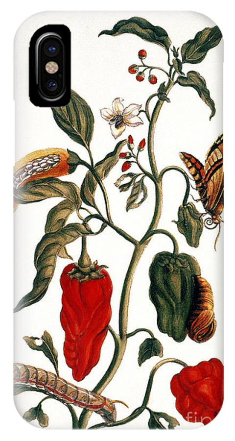 1726 IPhone X Case featuring the photograph Pepper Plant by Granger