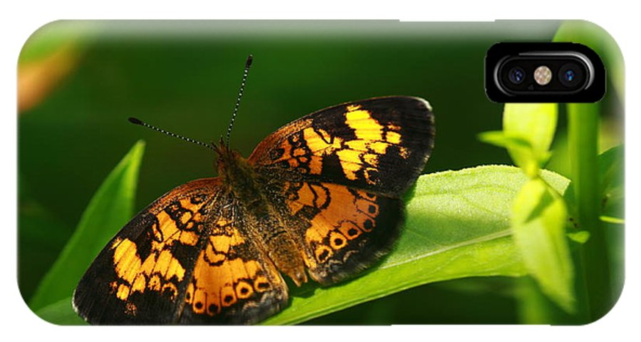 Butterfly IPhone X Case featuring the photograph Peral Cresent by Paul Slebodnick