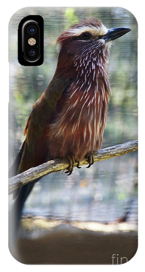 Bird IPhone X Case featuring the photograph Perched - 3 by Linda Shafer