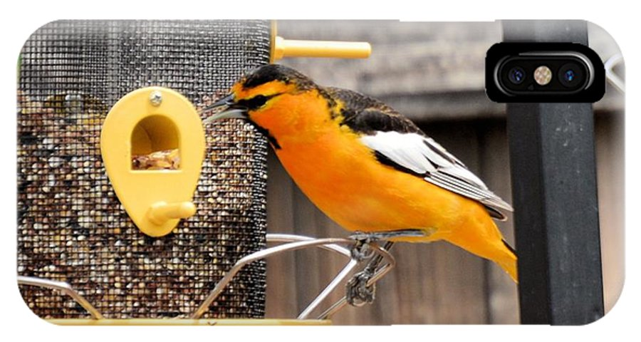 Bird IPhone X Case featuring the photograph Perched Oriole by Wendy Fox