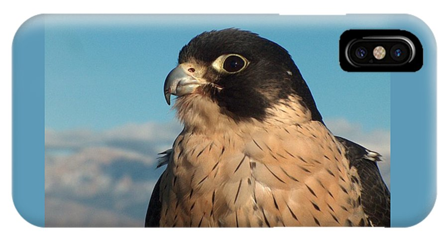 Peregrine Falcon IPhone X / XS Case featuring the photograph Peregrine Falcon by Tim McCarthy