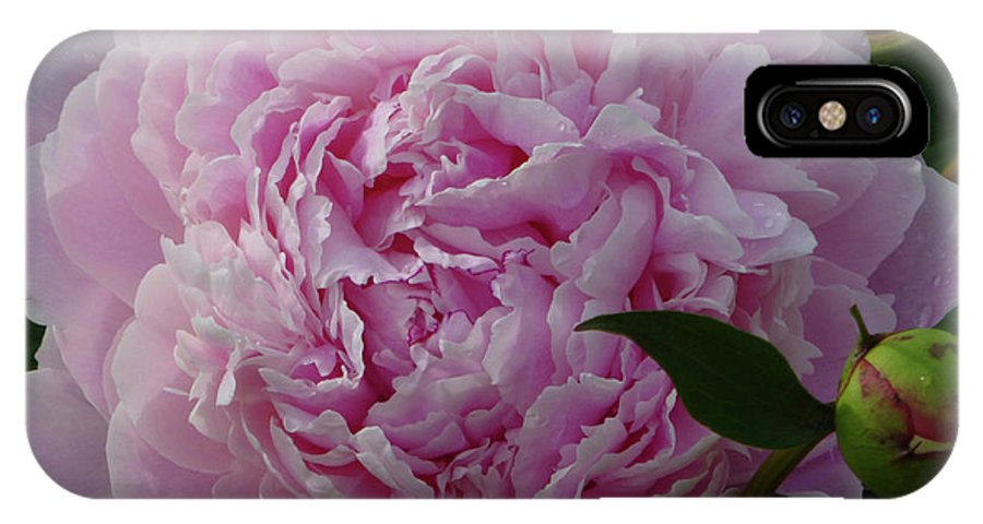 Flowers IPhone X Case featuring the photograph Perfection In Pink by Cris Fulton