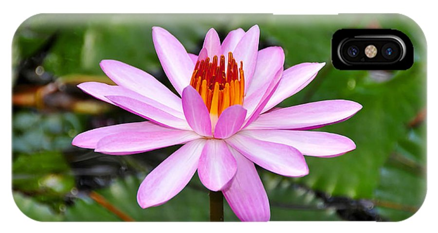 Flower IPhone X Case featuring the photograph Perfectly Pink by David Lee Thompson