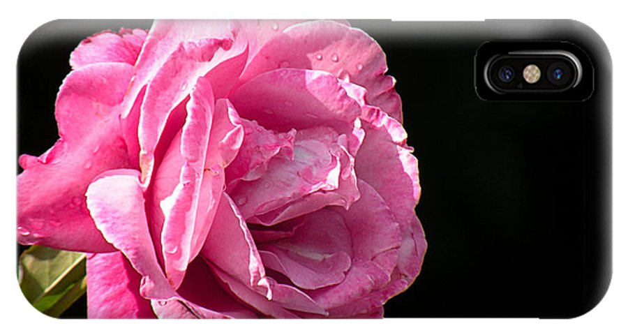 Rose IPhone X Case featuring the photograph Perfectly Pink by Rosalie Scanlon