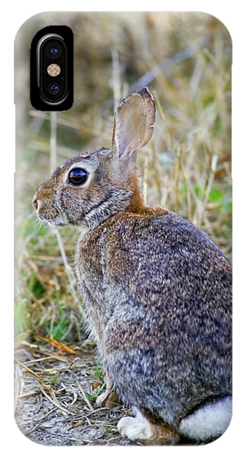 Bunny IPhone X Case featuring the photograph Peter Cottontail by Randall Ingalls