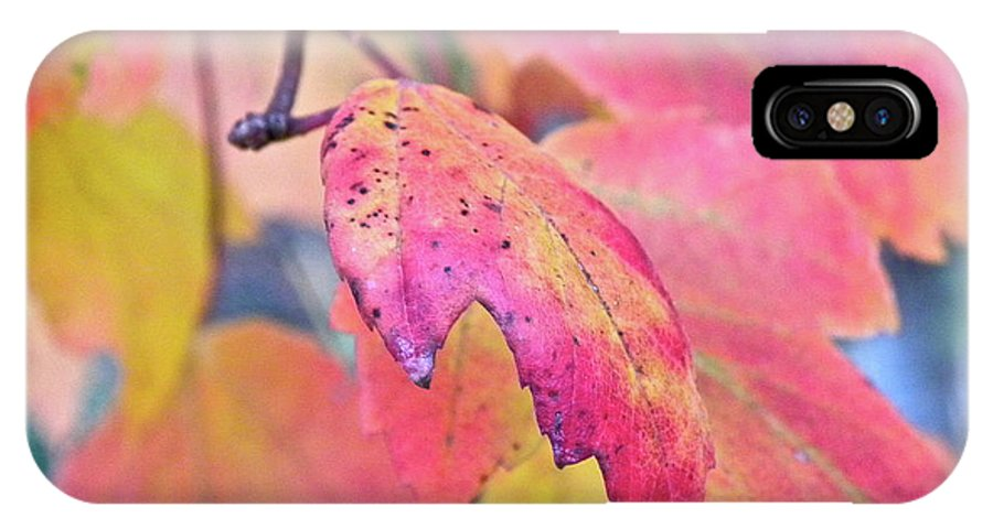 Fall IPhone X Case featuring the photograph A Sign Of Fall by Shannon Turek