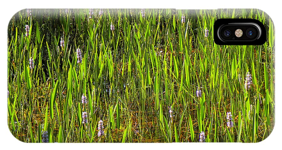 Pickerelweed IPhone X Case featuring the photograph Pickerelweed by Rosalie Scanlon