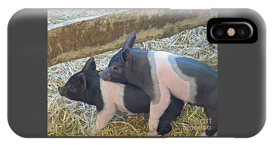 Piggyback; Piglets IPhone X Case featuring the photograph Piggyback by Ann Horn