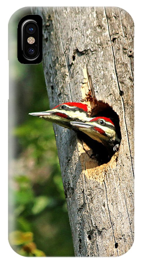 Woodpecker IPhone X Case featuring the photograph Pileated #29 by James F Towne