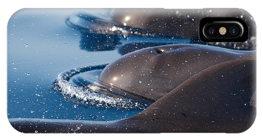 Spain IPhone X Case featuring the photograph Pilot Whales 1 by Jouko Lehto