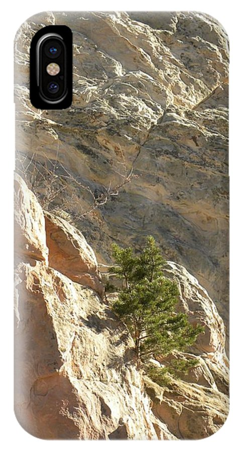 Colorado IPhone X Case featuring the photograph Pine On Limestone Wall by CL Redding