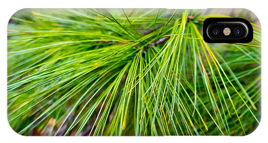 Fresh IPhone X Case featuring the photograph Pine Tree Needles by SR Green