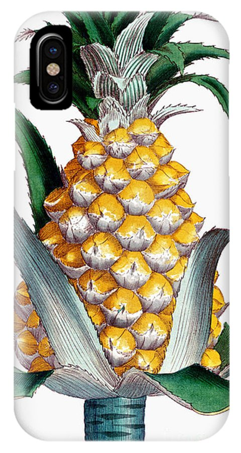 1789 IPhone X Case featuring the photograph Pineapple, 1789 by Granger