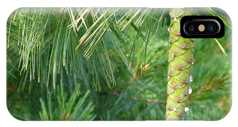 Pine IPhone X Case featuring the photograph Pinecone by Rhonda Barrett