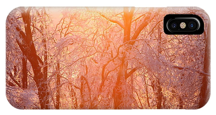 Pink IPhone Case featuring the photograph Pink And Gold by Nadine Rippelmeyer