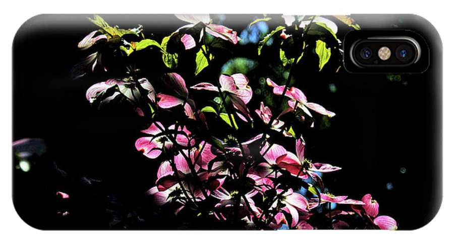 Pink And White Blossoms IPhone X Case featuring the photograph Pink And White Blossoms by David Frederick