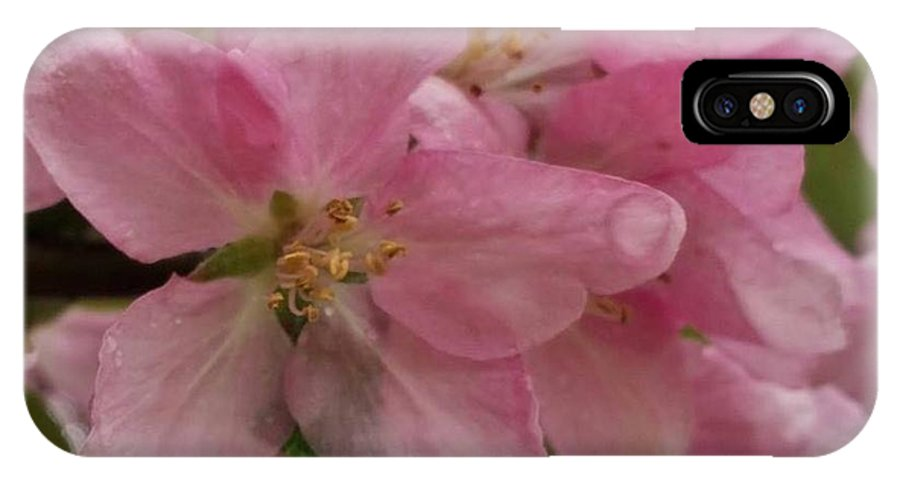 Pink IPhone X Case featuring the photograph Pink Azaleas by Marie Brumbach