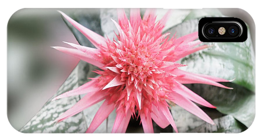 Bromeliad IPhone X Case featuring the photograph Pink Bromeliad by Art Spectrum