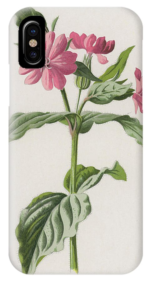 Campion IPhone X Case featuring the painting Pink Campion by Frederick Edward Hulme