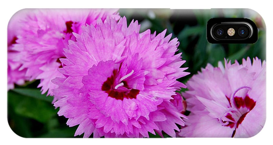 Pink IPhone X Case featuring the photograph Pink Carnation Cluster by Nancy Trevorrow