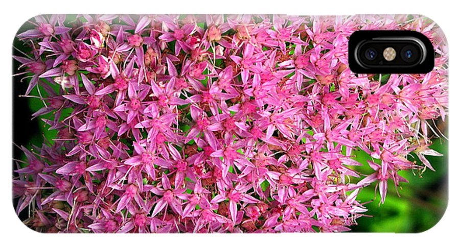 Flower IPhone X / XS Case featuring the photograph Pink by Colleen Kammerer