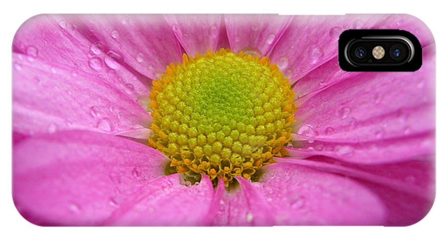 Pink Daisy IPhone X Case featuring the photograph Pink Daisy With Raindrops by Carol Groenen