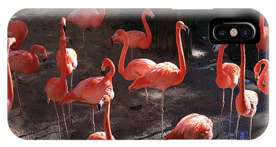 Pink Flamingos IPhone X Case featuring the greeting card Pink Flamingos by Carol Groenen