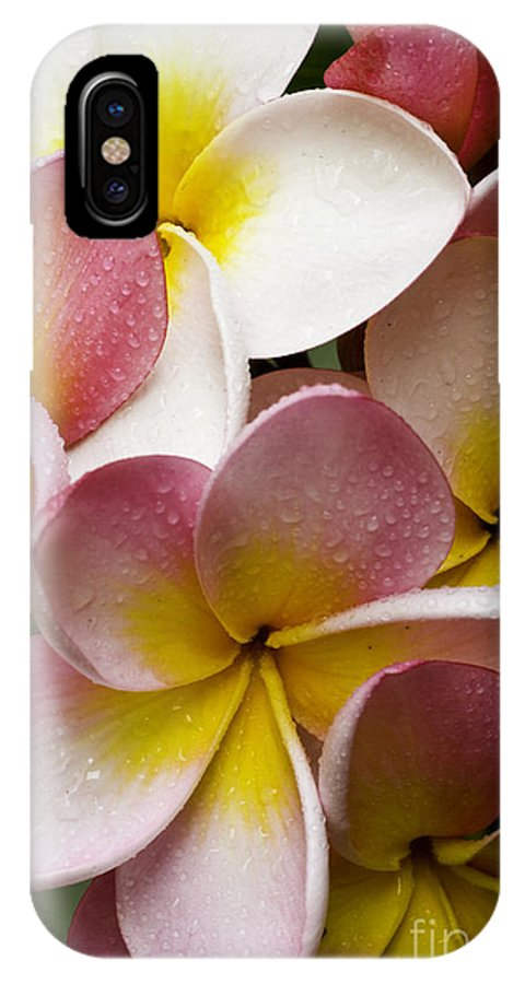 Pink Frangipani IPhone Case featuring the photograph Pink Frangipani by Sheila Smart Fine Art Photography