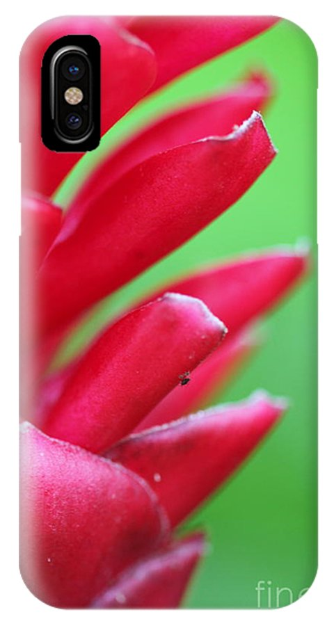 Ginger IPhone Case featuring the photograph Pink Ginger by Nadine Rippelmeyer