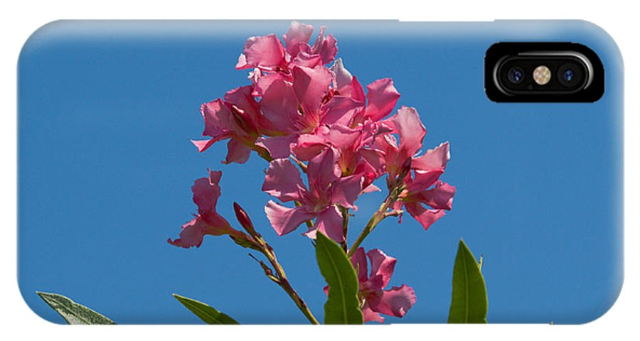 Florida; Indian; River; Melbourne; Nerium; Oleander; Red; Pink; Flower; Bush; Shrub; Poison; Poisono IPhone X Case featuring the photograph Pink Oleander Flower In Spring by Allan Hughes