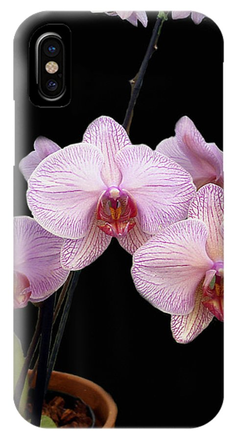 Flowers IPhone X Case featuring the photograph Pink Orchids by Kurt Van Wagner