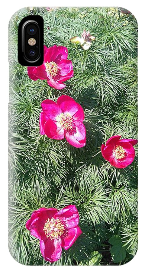 Pink Peony And Green Grass IPhone X Case featuring the photograph Pink Peony by Connie Du