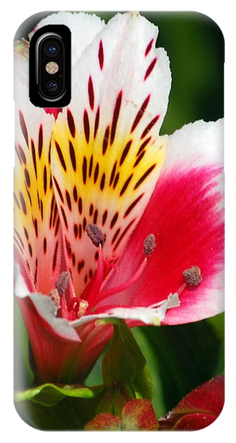 Peruvian IPhone Case featuring the photograph Pink Peruvian Lily 1 by Amy Fose