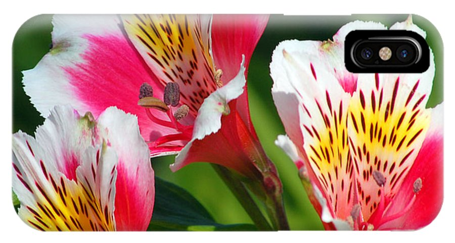 Peruvian IPhone Case featuring the photograph Pink Peruvian Lily 2 by Amy Fose