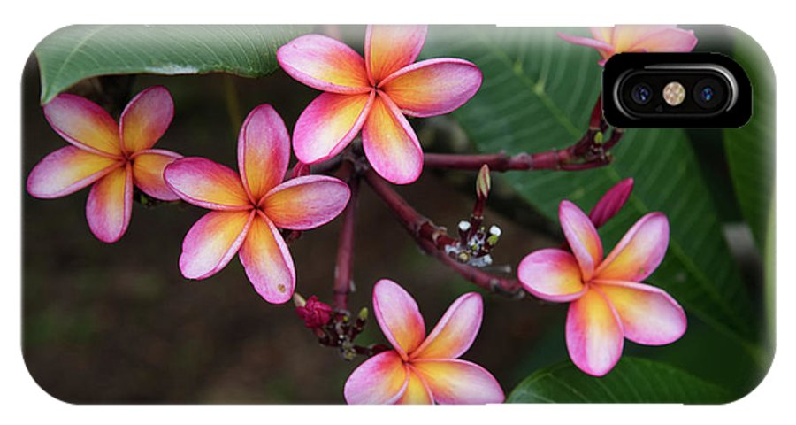 Plumeria IPhone X Case featuring the photograph Pink Plumeria by Zina Zinchik