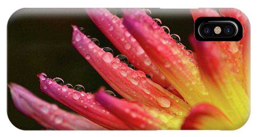 IPhone X Case featuring the photograph Pink Rain by Glen Baker