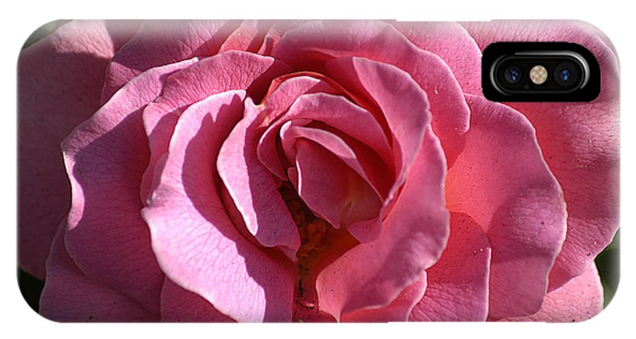Clay IPhone Case featuring the photograph Pink Rose by Clayton Bruster