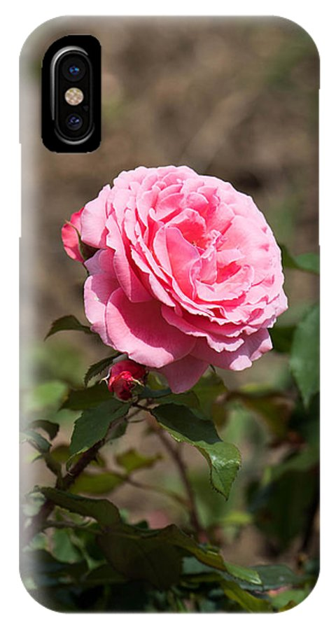 Abstract IPhone X Case featuring the photograph Pink rose with buds by Adrian Bud