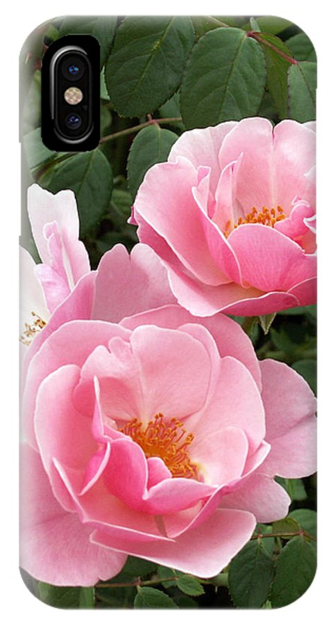 Roses IPhone Case featuring the photograph Pink Roses 1 by Amy Fose
