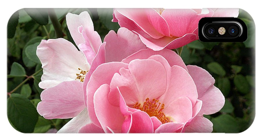 Pink Roses IPhone X Case featuring the photograph Pink Roses 2 by Amy Fose