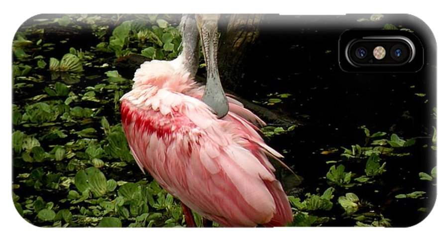 Bird IPhone X Case featuring the photograph Pink Spoonbill by Rosalie Scanlon