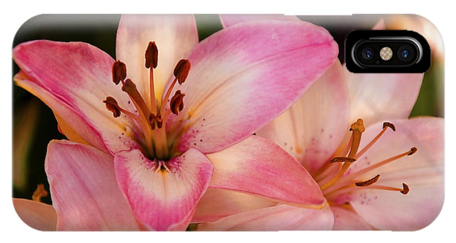 Pink IPhone X Case featuring the photograph Pink Spring Lilly by Terry Anderson