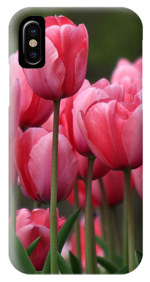 Pink Tuilips IPhone X Case featuring the photograph Pink Tuilips by Martina Fagan
