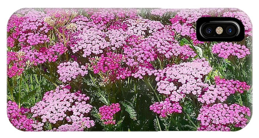 Yarrow IPhone X Case featuring the photograph Pink Yarrows by Mioara Andritoiu