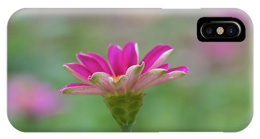 Pink Flower IPhone X Case featuring the photograph Pink Zin by Kelly Foreman