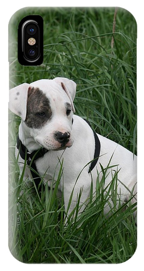Pit IPhone X Case featuring the photograph Pit Bull Puppy 5 White With Patch by David Dunham
